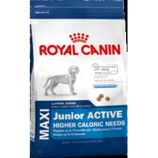 Royal Canin 2 x Maxi Junior ACTIVE - 15kg (30kg)